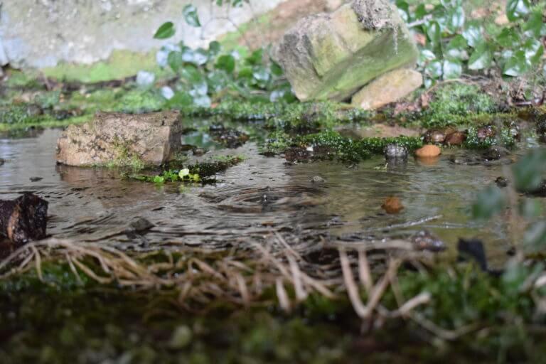 Stream with shrubs