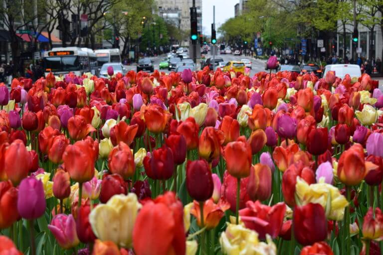 Flowers website design